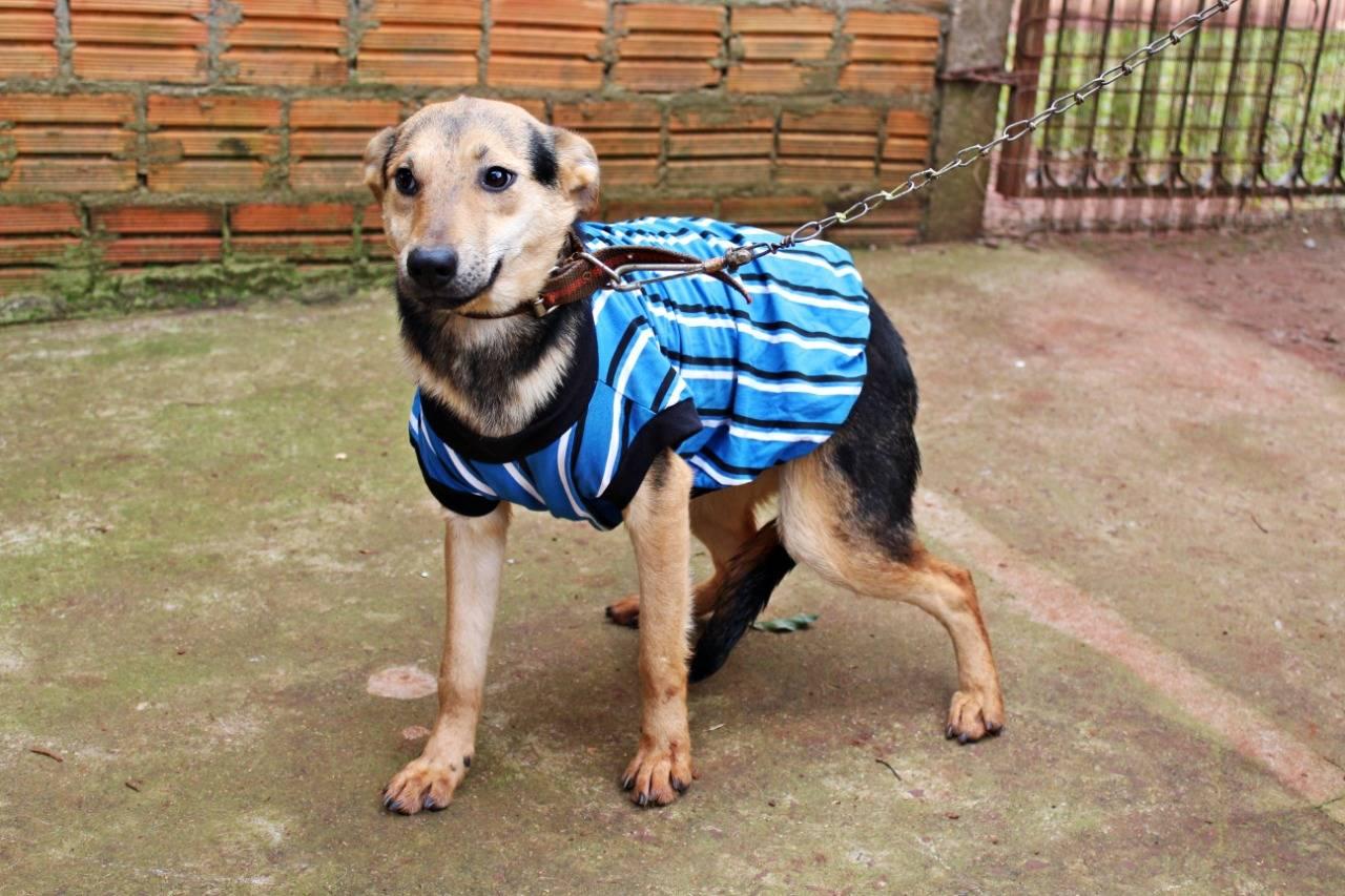 Cães abrigados no Canil de São Luiz Gonzaga esperam por um novo lar