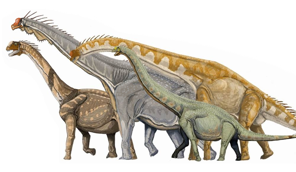 Four Macronarian Sauropods (© Wikipedia)
