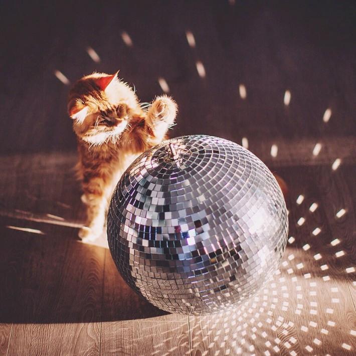 Как кот из Котлеты превратился в Котриарха (26 фото)