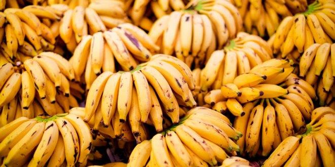 Cooperativa de Tabira bem perto de se tornar referência em produção de banana
