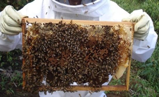 Apicultores pernambucanos recebem formação para exportação do mel