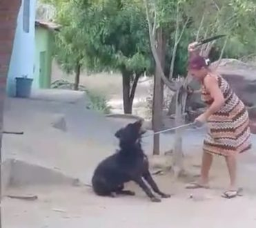 Flagrante de mulher matando cão a facadas em Itapetim revolta população |  Rádio Pajeú
