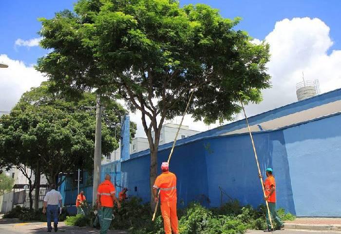 São José vai cadastrar 80 mil árvores a partir de abril
