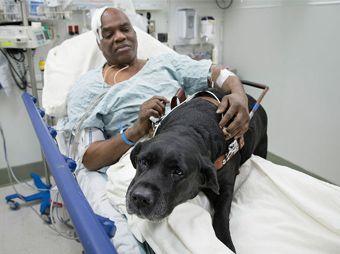 Perro salva a su amo tras caer en las vías del metro