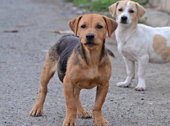 José Luis Icedo indicó que a los animales  enfermos que durea más de 72 horas en el centro, se les aplica la eutanasia después de la anestesia, mientras que a los animales sanos se les separa