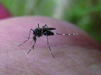 La OMS señala que este padecimiento se puede confundir con el dengue ya que algunos de los síntomas son iguales y se presentan en las mismas zonas.