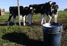 Productores tiran tres mil litros de leche al día por aguas contaminadas