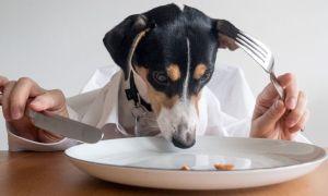 Alimentación de un perro, esencial para su larga vida