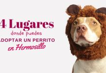 adoptar perros en Hermosillo