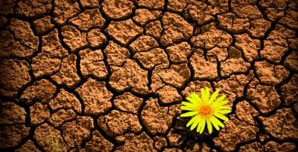 Resiliencia-Los-12-habitos-de-las-personas-resilientes