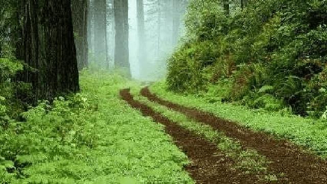 Un lugar en el bosque… y en el mundo, con Gustavo Efron