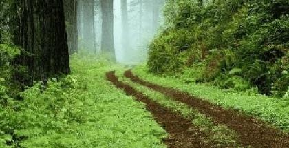 bosque jasdico