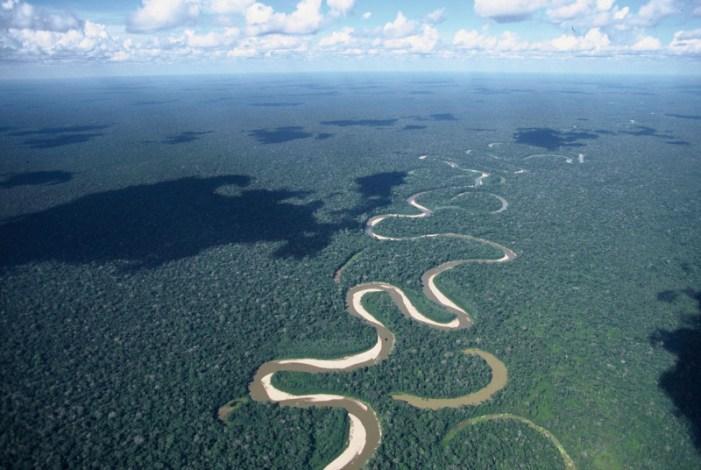 Come la soia distrugge l'ecosistema dell'Amazzonia