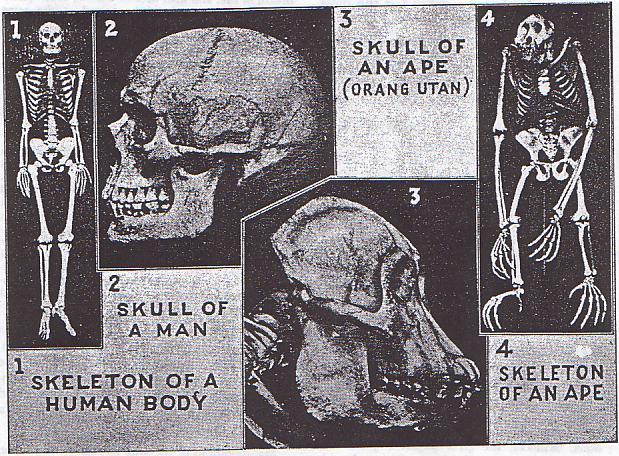 [IMMAGINE STUPENDA (6)] Anti-evoluzionismo