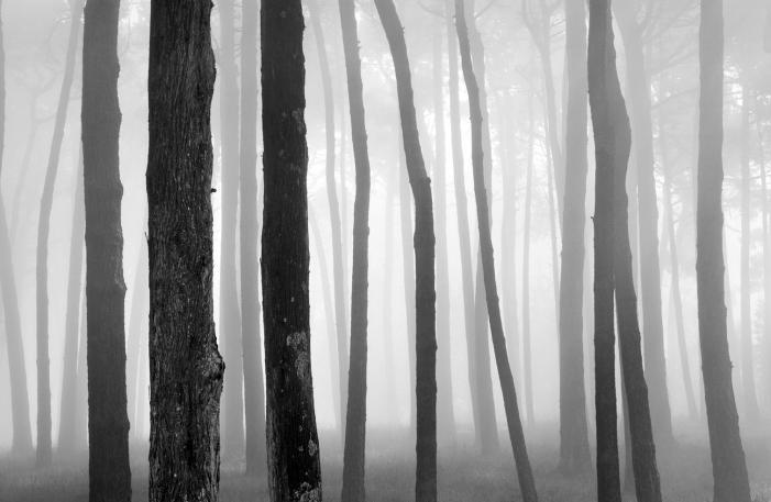 """Un'ombra nel paese delle fate: """"Gli alberi dell'orgoglio"""" di G. K. Chesterton"""