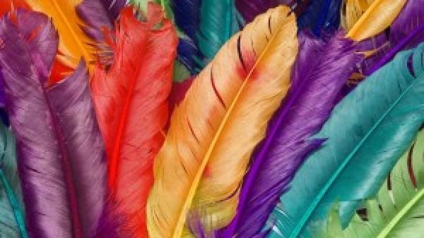 piume_arcobaleno_HD