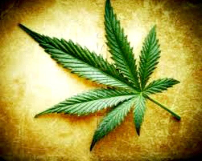 I fumatori di marijuana diventano alcolisti 5 volte più facilmente