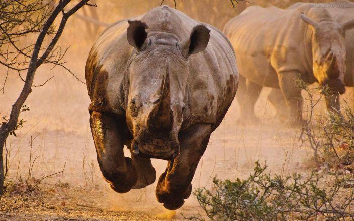 Rinoceronti di bar e di sacrestia. Di Piero Vassallo