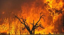 Le fiamme del Portogallo ci interrogano