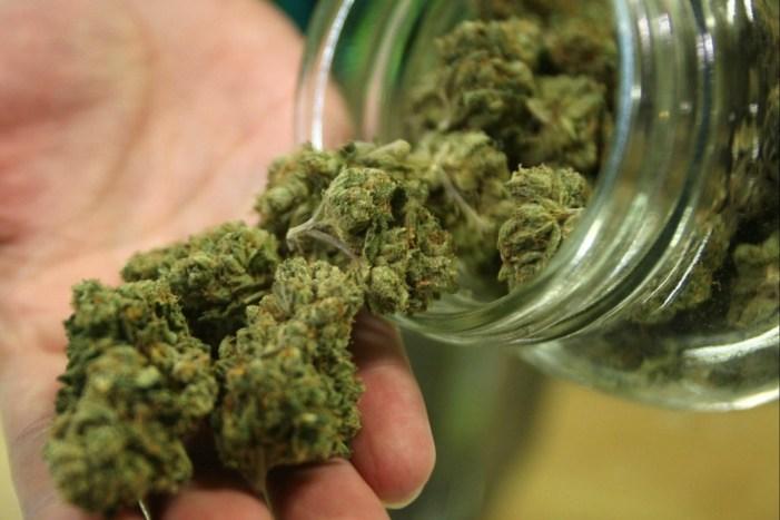 [VIDEO] Senza vergogna: +Europa distribuisce cannabis e chiede il voto per legalizzarla