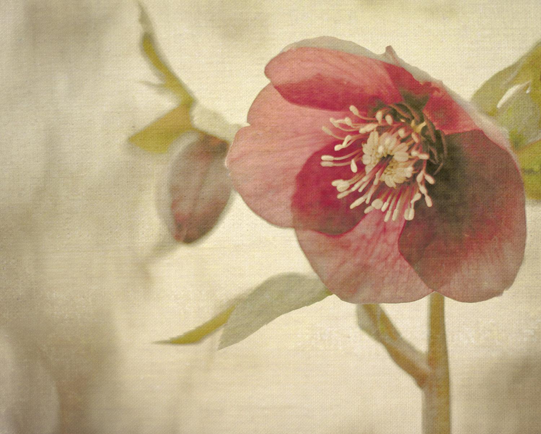 fiore vita