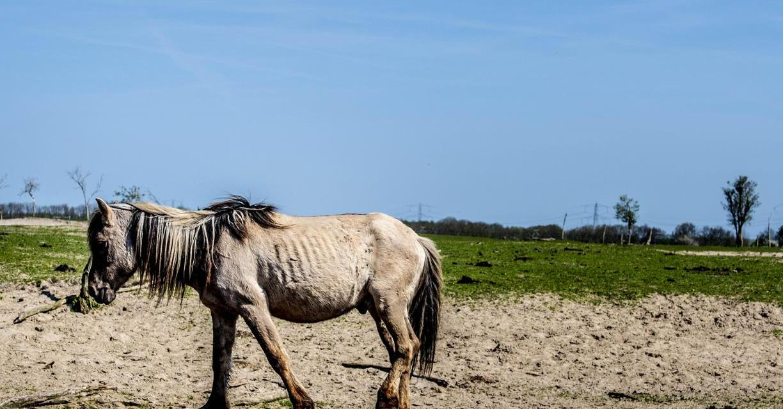[IDEOLOGIA E REALTÀ] Il paradiso ecologista olandese dove gli animali muoiono di fame