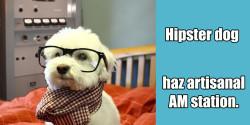 Hipster dog has artisanal radio station - 2x1