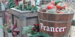 Holiday scene at Disneyland. Radio holiday gifts guide. Photo: J. Waits