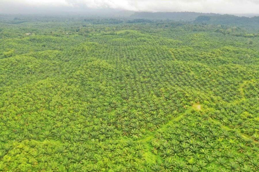 Pueblos rodeados: las tácticas de las palmicultoras en Ecuador