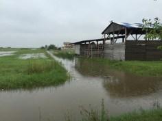 inundatii sacalaz 28.06 (2)