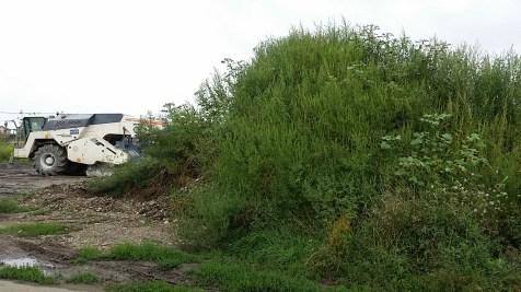 Ambrozie la șantierul de lângă fosta unitate militară