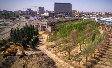 arbori parc openville (1)