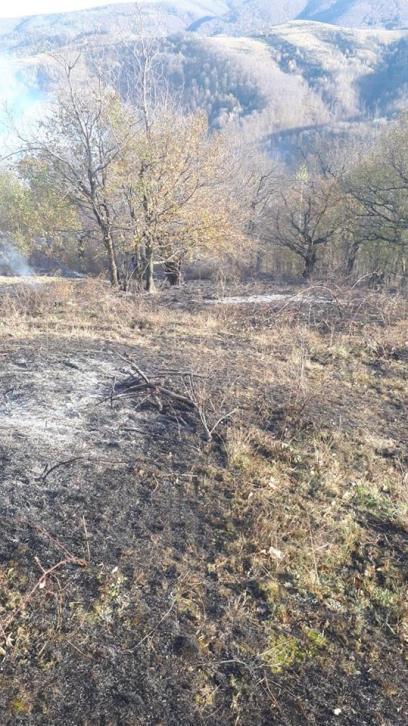 incendiu Semenic (6)
