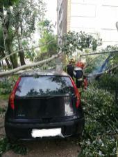 copaci rupti furtuna 19.05.19 (3)