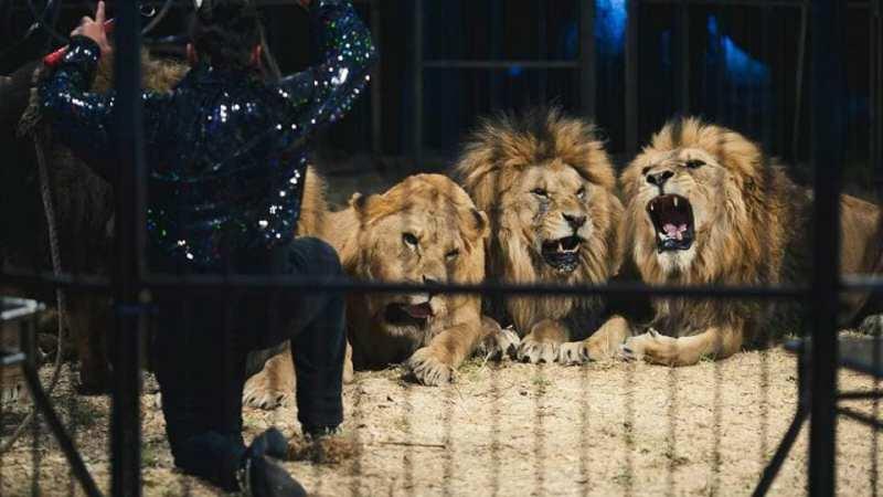 A Termini Imerese l'internazionale e strabiliante Happy Circus
