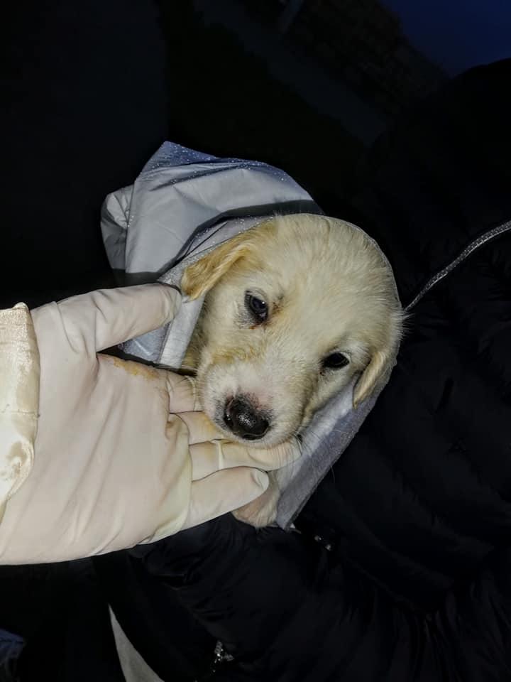 Carlentini, i volontari della Leidaa salvano nove cuccioli sotto la pioggia.