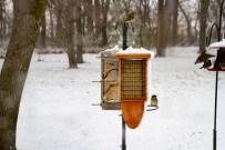 2016-11-18 Birds 29