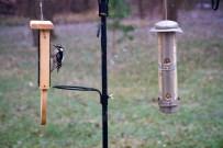 2016-11-29 Birds 53