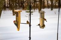 2016-12-17 Birds 111
