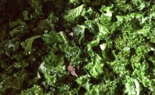 Making Kale chips. Thanks to my sis @runtricpa for the recipe :) #healthyish #snack