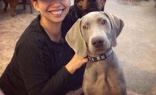 Sis & her fur babies! The puppies are staying over for Thanksgiving :) #dogsofinstagram #rottweiler #weimaraner #desertdashracestruckerhat [instagram]