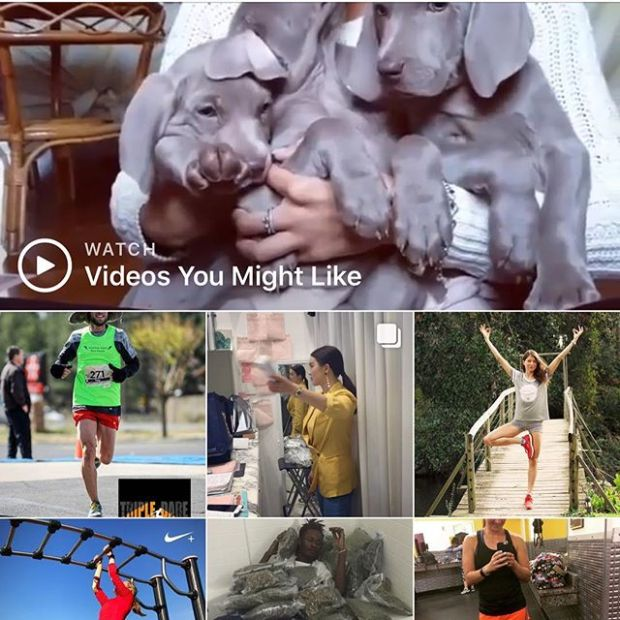 Inspired by @coachjimmydean post... Instagram knows me so well: running & #weimaraners Well, sort of! Guy on pot bed?! Lol is it because it's 420? That's for my bro @jeremiel5 #instasuggestion #instagramlogic