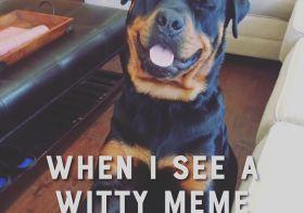 Meme break before the next call! lol #rottweiler [instagram]