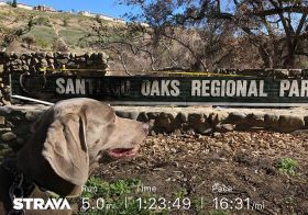 Last Saturday, Kingston and I walked to Santiago Oaks trailhead for a quick run around the trails that were devastated by #canyonfire2 Our fav routes were still closed for fire recovery and we saw a lot of the damage, but we also saw all the new growth of wildflowers at the burn areas and even spotted a deer! [instagram]