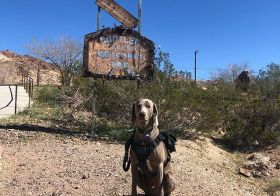 Kingston needed to get his service hours for Western States jk. He really did help me mark the course for Saturday's Blood, Sweat, & Beers race by @desertdashtrailraces. . .  @gattijennifer joined us for the first part, going down East leg & then we bid our farewells. @hendrixandkingston & I then finished up the last bit, going up Girl Scout to Caldera; at one point he didn't believe me that we were nearly done, but I bribed him with treats and the world was ok again. . . .Best of luck to all racing tomorroz! See you at Caldera Aid Station and the evening 5km! [instagram]