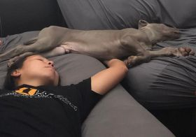 My bro caught us napping plus other pupper naptime photos from yesterday and today. Sterling is adjusting well. He didn't cry overnight on day 2 and 3. He does dream and like his cousin Kingston, yelps sometimes during naps [instagram]