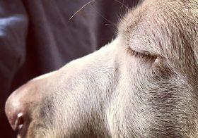 Sterling's eyelashes. [instagram]