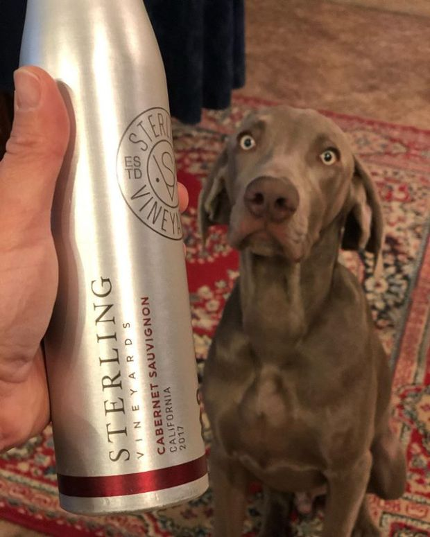 """Happy 6 months old @sterlingd.weim ! In your honor, we will be enjoying this Cab from """"your"""" vineyards 🤣 (by """"we"""", I mean me and Mommels). Also, this was procured because it bore your name and was in an aluminium bottle 🤣#weimaraner #cabernetsauvignon #californiawine"""