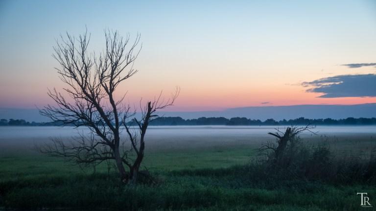 10. Juni – Vogelschau und Nebelshow