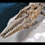 The Mosasaurus